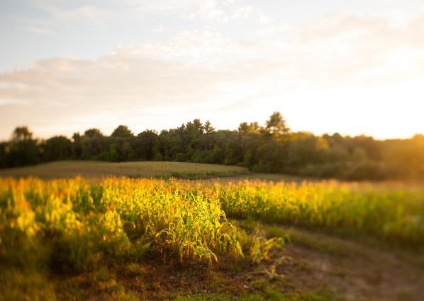 field in sunlight
