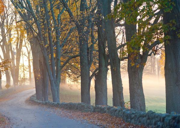 Fall Road in Mist